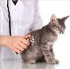 Ветеринарные клиники в Нижнем Ломове